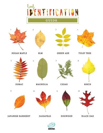 leaf-identification-guide-long