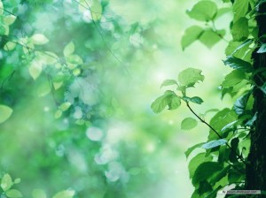 nature-wallpaper-8